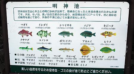 明神池の魚