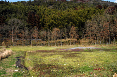 白水川の近くの草原