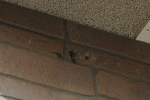 玄関にツバメの巣