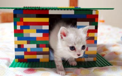 LEGOの家と子猫ちゃん