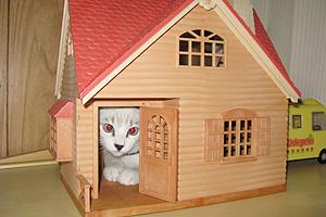 猫と住まい