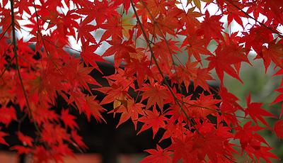 紅葉は暖色系